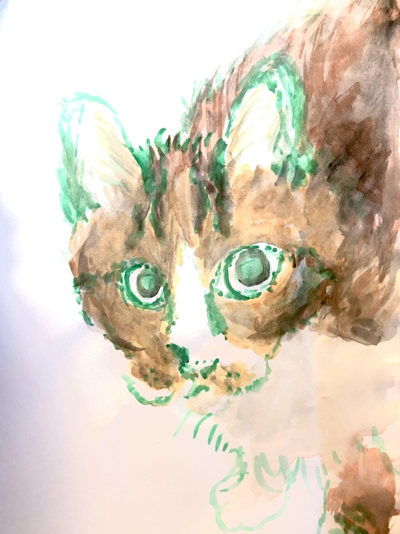 #9歳 長生きする猫